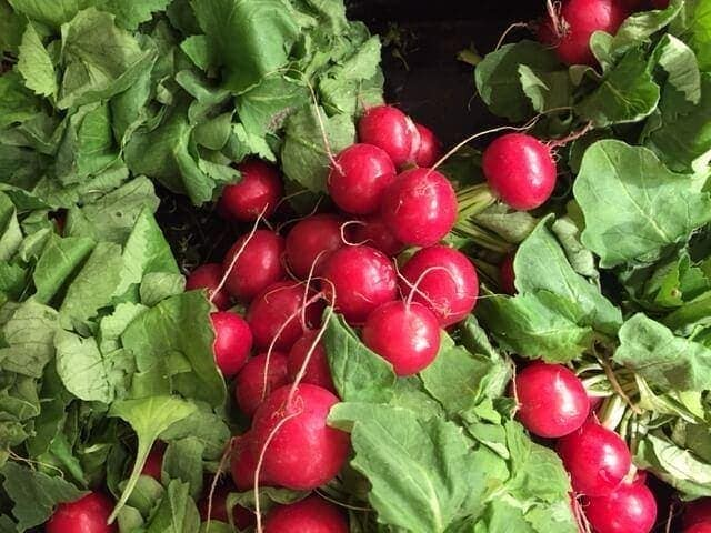 close up of radishes with leaves